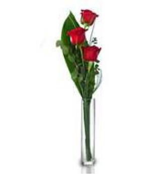 Three roses to Italy