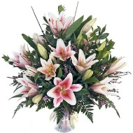 Stargazers Lilies