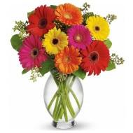 Gerberas. Vase Included